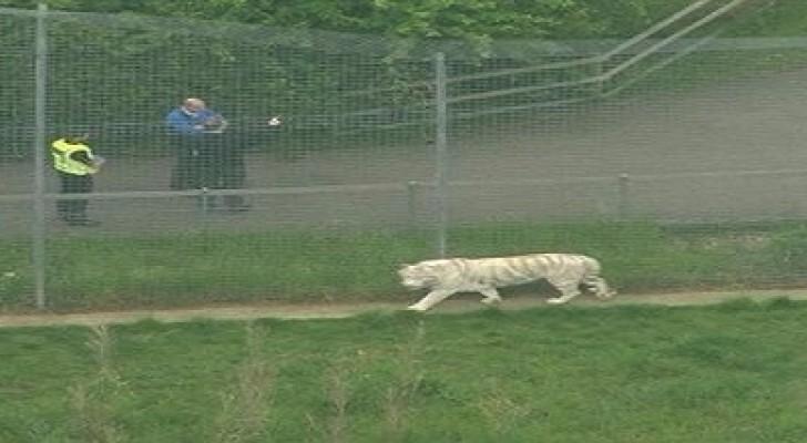 نمر يقتل حارسة بحديقة حيوانات في انجلترا