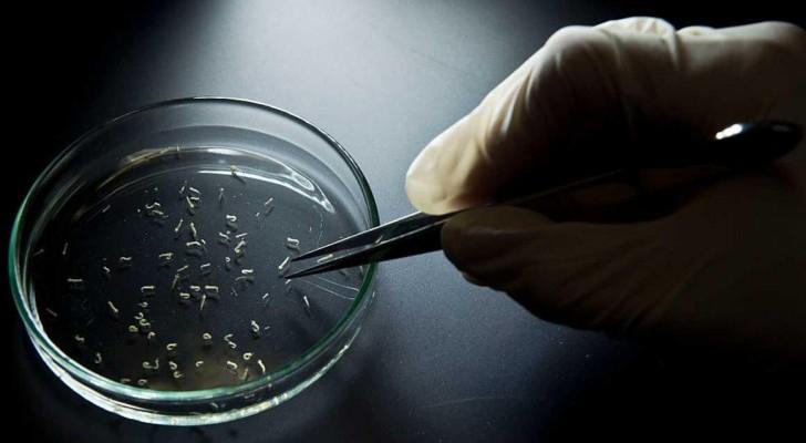 اكتشاف جديد حول فيروس زيكا