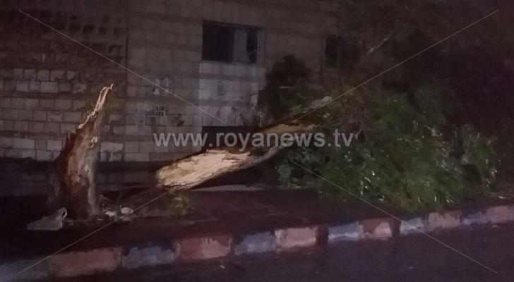 سقوط أشجار وأعمدة كهرباء