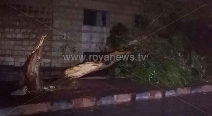 الرياح العاتية التي شهدتها المملكة أسقطت 105 أشجار وهذه تفاصيلها