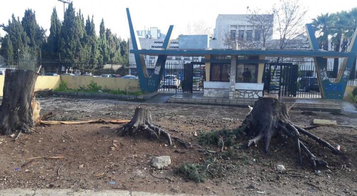 قطع أشجار في محيط الجامعة الاردنية