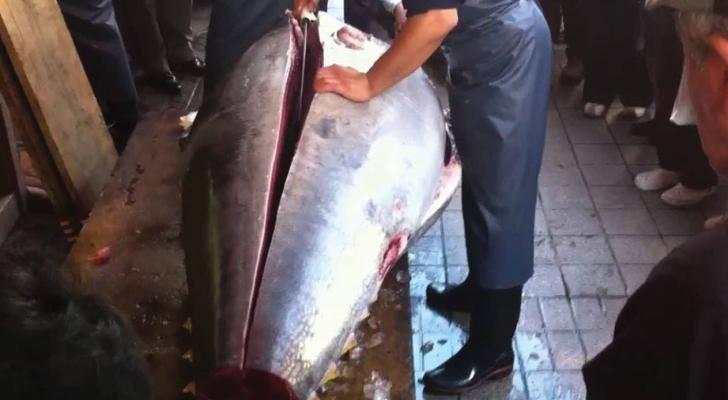 بيع سمكة تونة ضخمة مقابل 3.1 مليون دولار في اليابان