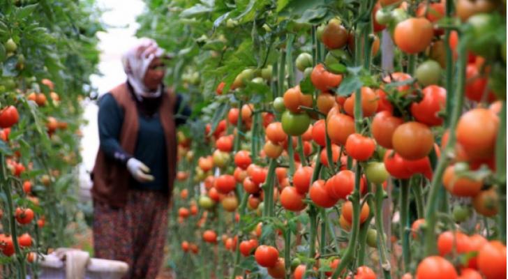 مزارعة أردنية - ارشيفية