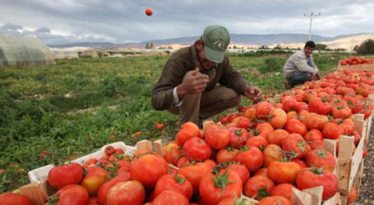 مزارع اردني - ارشيفية