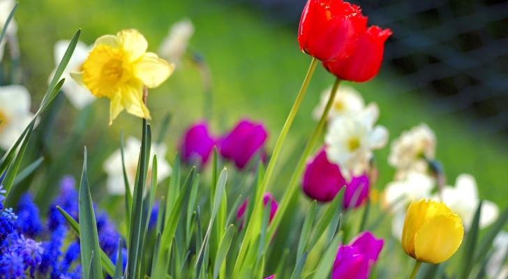 ورود الربيع
