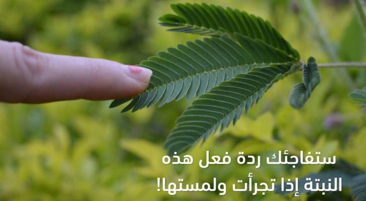 صورة للنبتة
