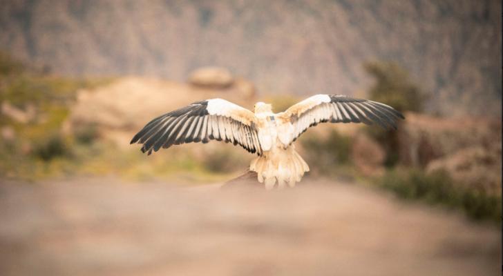 صورة من تركيب الاجهزة على الطيور