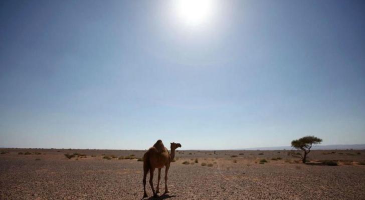 الموجة قادمة من شبه الجزيرة العربية