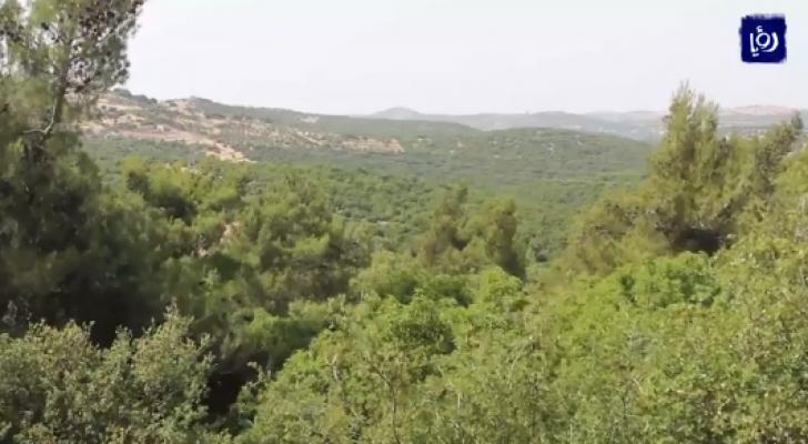 الحرائق والتحطيب الجائر يهددان الغابات الحرجية في المملكة