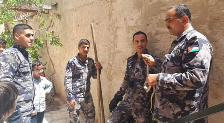 الدفاع المدني يتعامل مع افعى في وادي موسى