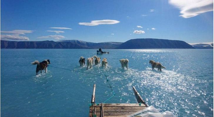 كلاب هسكي تجر مزلجة جليدية وسط المياه