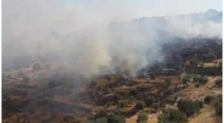 إخماد حريق أعشاب جافة وأشجار حرجية ومثمرة في جرش