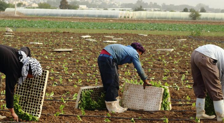 أكد البطاينة حرص الحكومة على دعم القطاع الزراعي