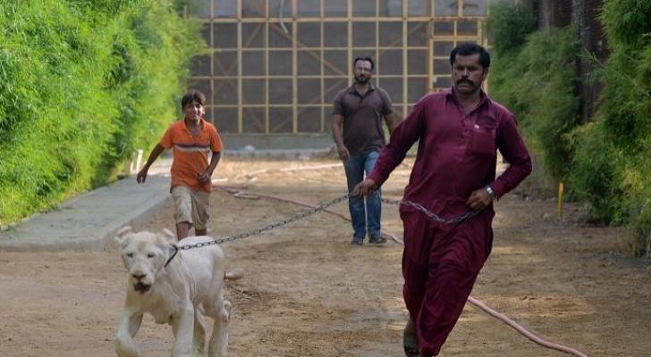 تسمح القوانين الباكستانية باستيراد الحيوانات البرية
