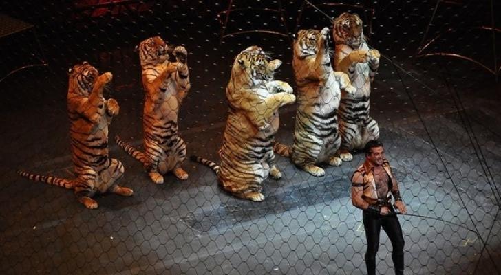 دعوات لحضر الحيوانات المفترسة بالسيرك
