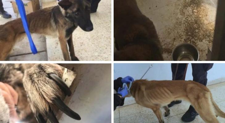 تقرير أمريكي يكشف نفوق عشرات الكلاب البوليسية في الأردن