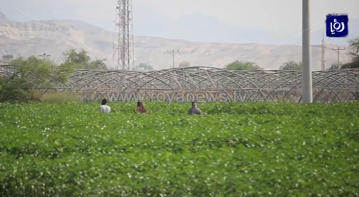 مزرعة في الأغوار
