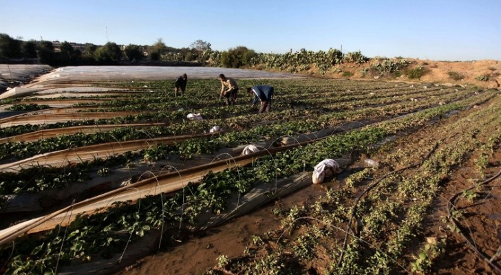 عدوان الإحتال على قطاع غزة يكبد القطاع الزراعي خسائر كبيرة