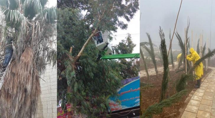 """أمانة عمّان..ألف شكوى تتعلق بـ""""قص أشجار"""" العام الحالي"""