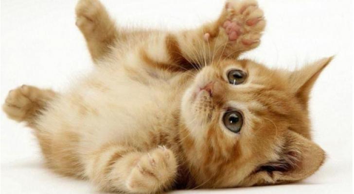 قطة - تعبيرية