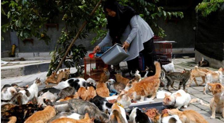 السيدة أجوستا رفقة القطط