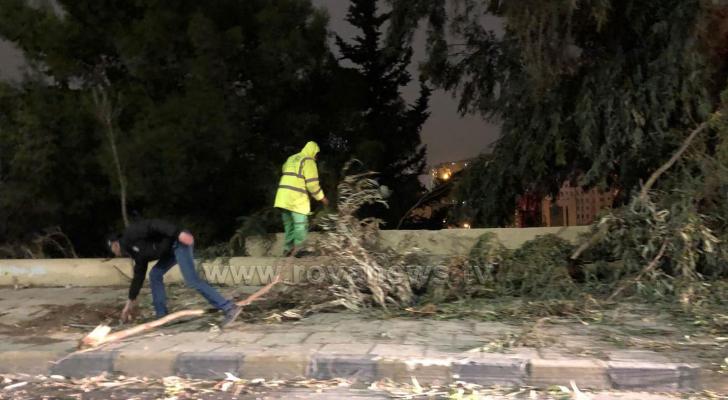سقوط أجزاء من شجرة بسبب الرياح بالقرب من الدوار الرابع