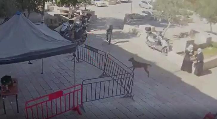 لحظة إطلاق النار على جنود الاحتلال في القدس