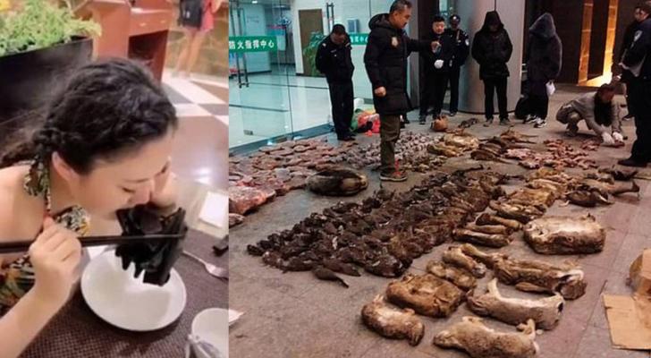 الصين تحظر كليا تجارة الحيوانات البرية واستهلاكها