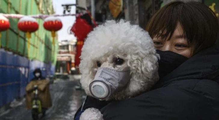 كلب أليف في هونغ كونغ بقناع واق