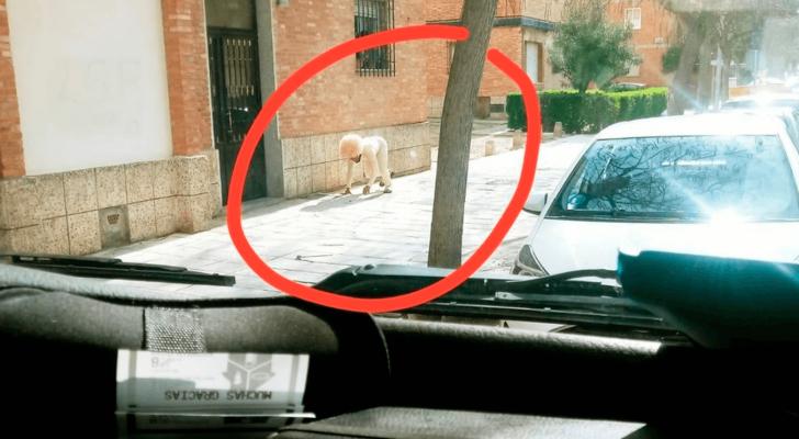 رجل يتنكّر في شكل كلب لكسر الحجر الصحي
