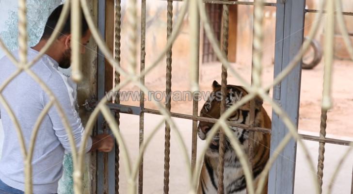 كورونا وحظر التجول يهددان حياة الحيوانات في الحدائق