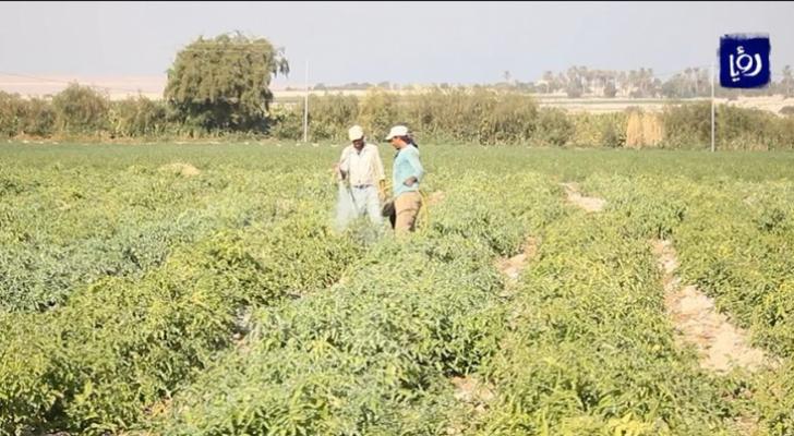 استثناء فئات زراعية من الحظر الشامل
