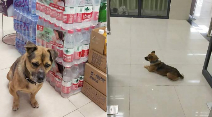الكلب الوفي لم يعلم أن صاحبه مات