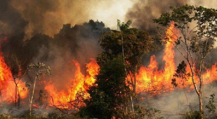 ارتفاع كبير جدا في عدد حرائق غابة الأمازون في البرازيل